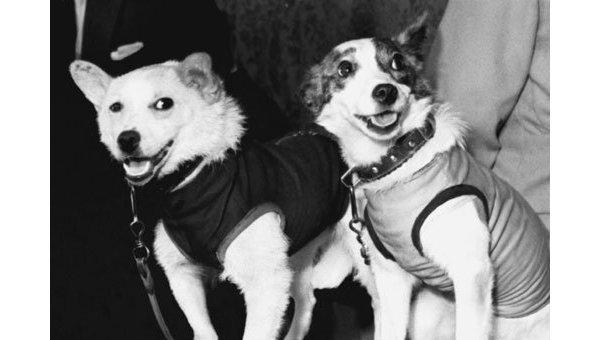"""Мультфильм """"Белка и Стрелка: Звездные собаки"""""""